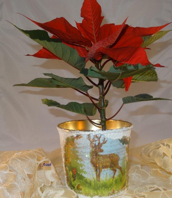 Aisab Dsc01318 Decu Doniczka święta Boże Narodzenie